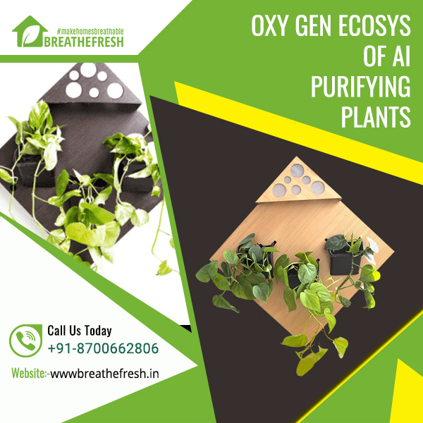 OXY - GEN | Ecosystem of Air Purifying Plants in India | Breathefresh