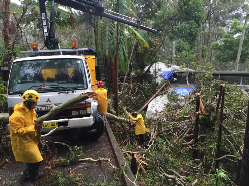 Avail the proficient tree cutting services in Wahroonga